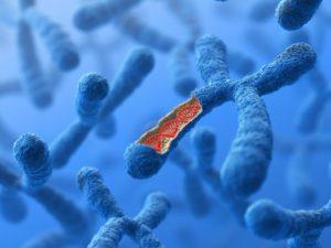Исследование Х-хромосомы