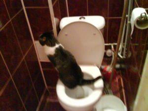 Часто хожу по ночам в туалет по маленькому