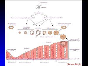 Персистенция фолликула и плохой рост эндометрия