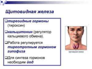 Лечение щитовидки без гормонов