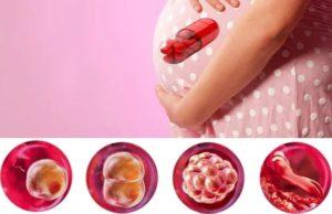 Медикаментозный аборт, прием боровой матки