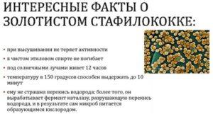 Как вылечить золотистый стафилококк