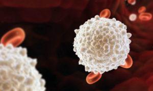 Лейкопения и планирование беременности