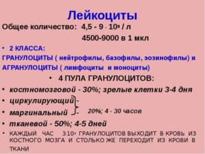 Лейкоциты 9,2