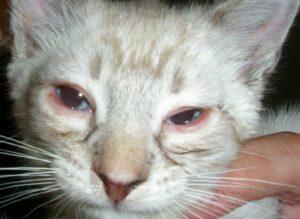 Болит глаз, ударил котёнок лапой