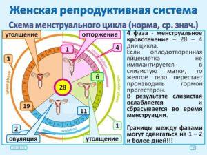Как сдвинуть цикл