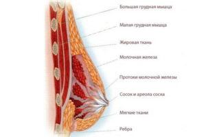 Болит и набухла грудь