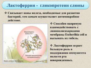 Лактоферрин содержит железо