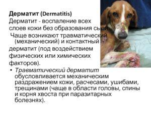 Механический(травматический) дерматит