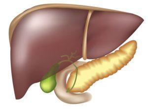 Изгиб желчного пузыря. Жировой гепатоз