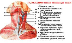 Болит шея, спереди