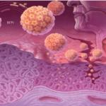 Мелкие красные точки на теле от спермы