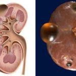 Курс тестостерона и беременность