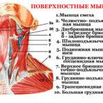 Боль в лобковой кости у ребенка