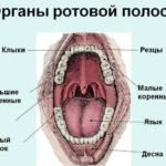 Боли в животе слева при беременности